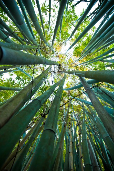 I sit along in the dark bamboo grove