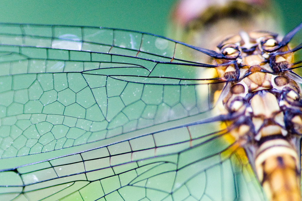 Zygote Quarterly  MCAD Sustainable Design Blog