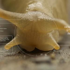 Slug_Perspective
