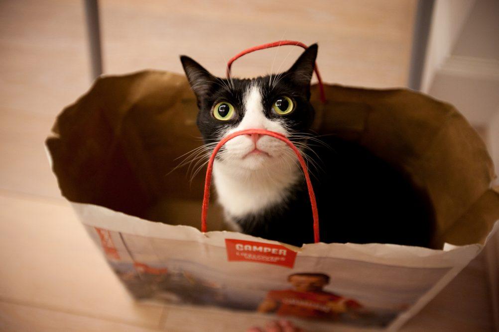 cat to go